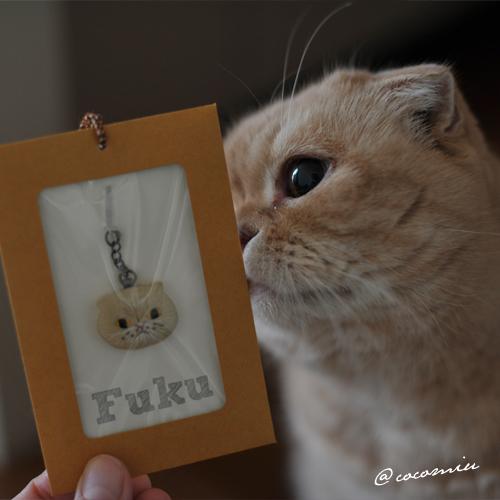 fuku1