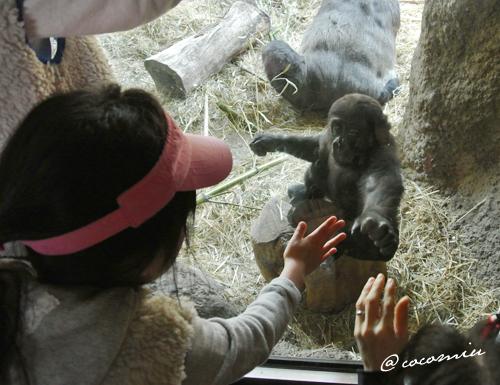 上野動物園 cocomiu